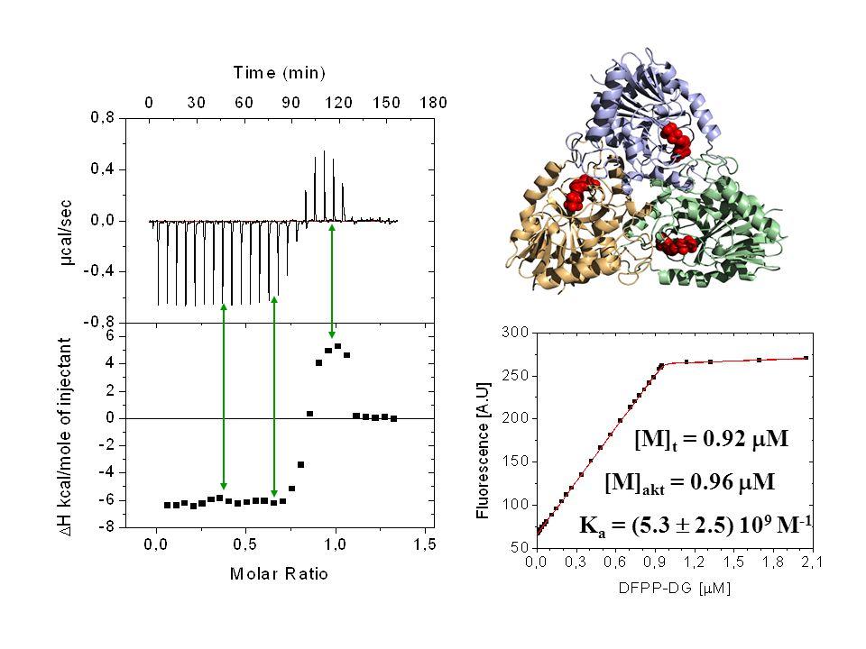 [M]t = 0.92 mM [M]akt = 0.96 mM Ka = (5.3  2.5) 109 M-1